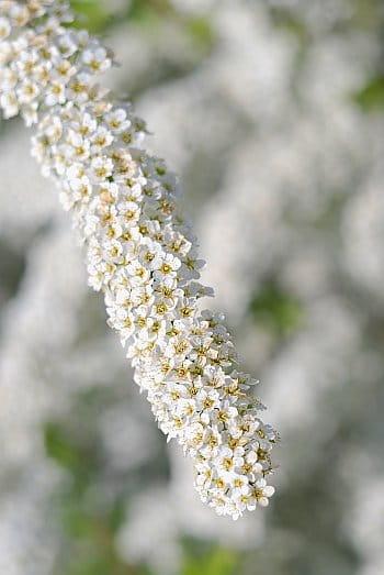Jaro v bílé