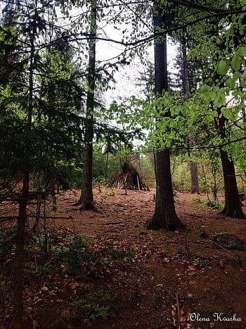 Stan v lese