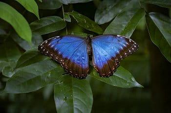 Motýlí cestovatel