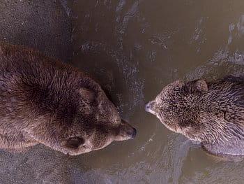Medvědi 1