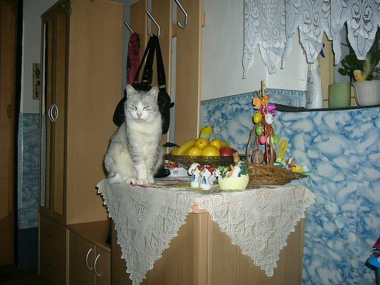Velikonoční kocourek