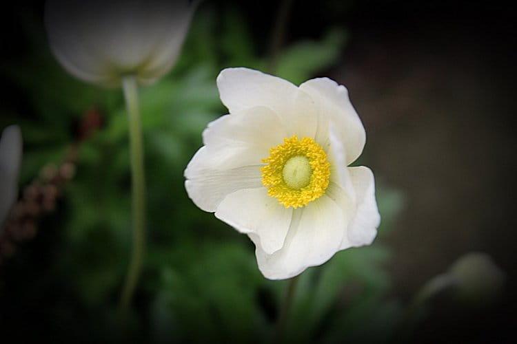 Kráska v zahradě...II.