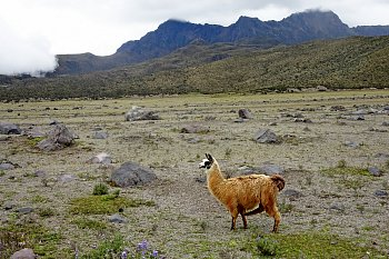 V Andách, Ekvádor