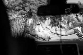 Setkání s divokým koněm