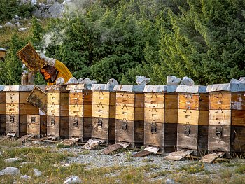 Včelař - Chorvatsko