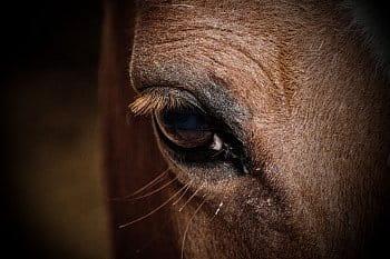 Osobnost ve zvířecím světě