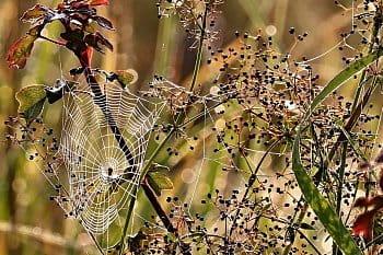 V pavoučí síti