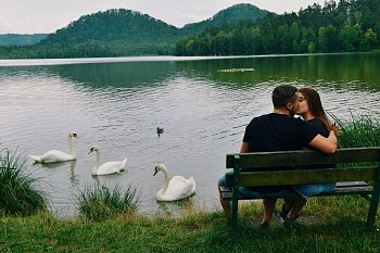 Labutě a láska