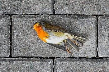 Jako zabít ptáčka