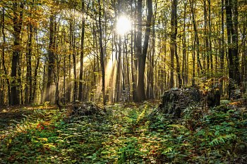 Les po ránu