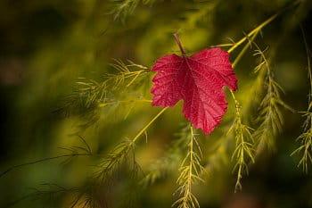 Posel podzimu