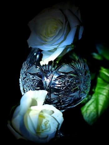Růže, sklo a tma