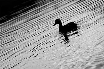 Pohoda u rybníka