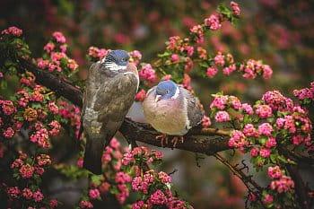 Ptačí láska