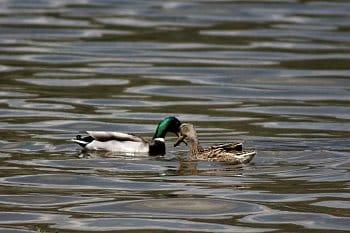 Láska na vodě