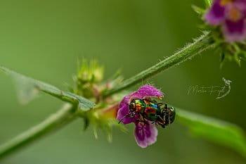 Hmyzí láska