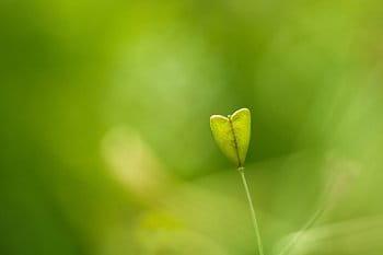 Srdce z přírody