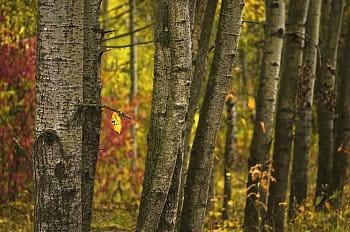 Les plný podzimu