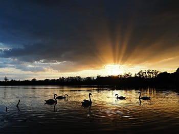 Labutí jezero