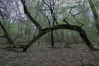 Ranšpurk - národní přírodní rezervace