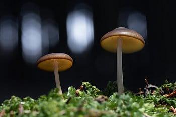 Magické houby