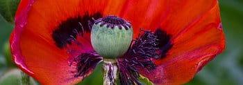 krásný květ i uvnitř