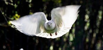 krásná v letu