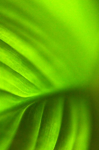 Moře zelené
