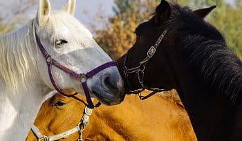 barvy koní