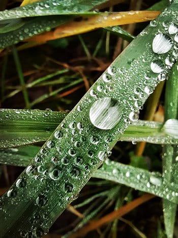 Voda vs. tráva