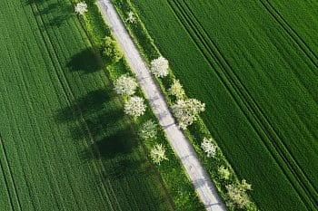 Zeleno-bílý koberec
