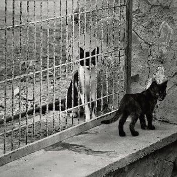 Život za mřížemi