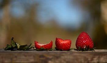 Osud jahody