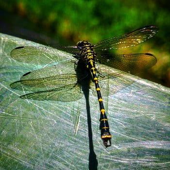 Na křídlech vážky