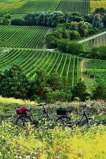 Léto na jižní Moravě