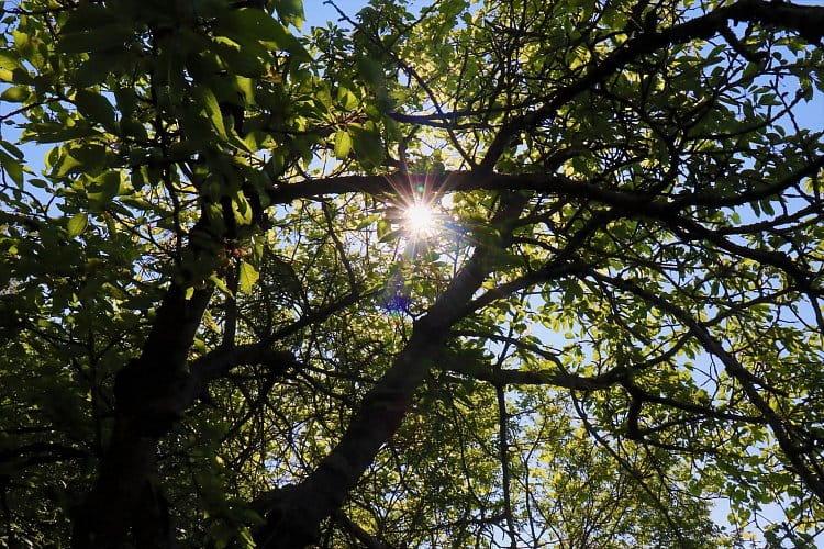 Slunce ve větvích