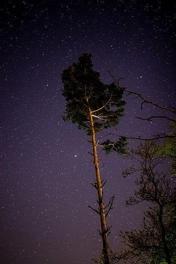 Půlnoční strom