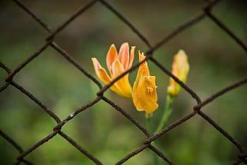 Uvězněná krása