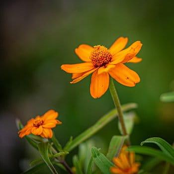 Pózující květinka