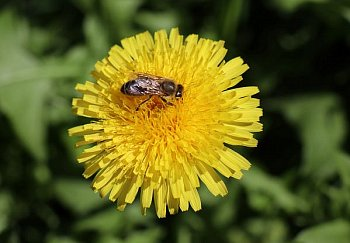 Krása i pro včelu