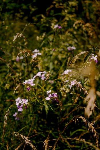 Krásky v trávě