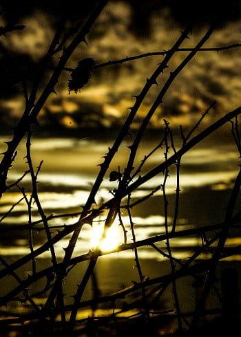 keře v západu slunce