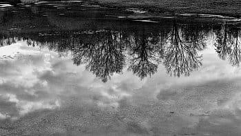 Stromy na hladině..