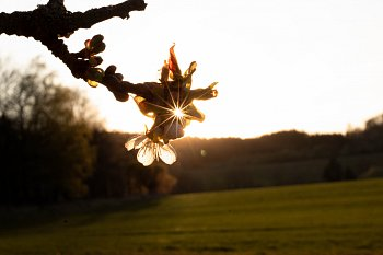 Paprsky v květu