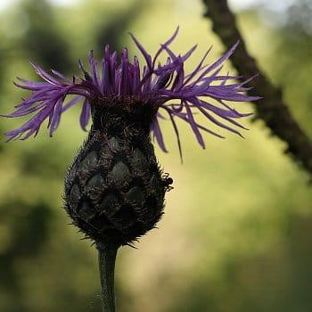 Květinová váza.