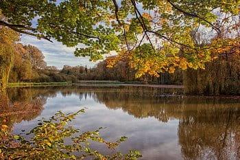 Stromy u vody...