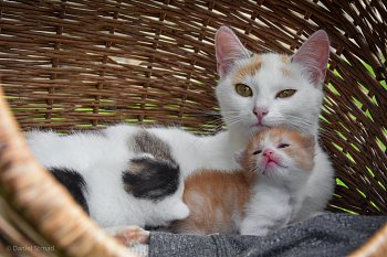 Kočičí maminka