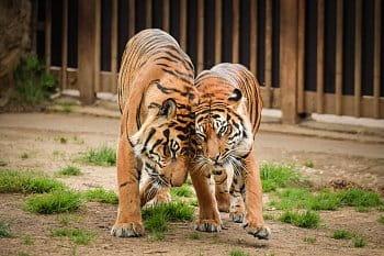 zvířecí láska