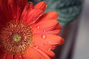 Kapky na květině