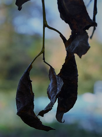 Poslední listí